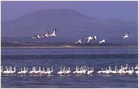 Abijatta-Shalla Lakes National Park