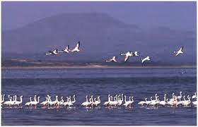 Abijatta-Shalla Lakes National Park